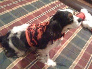 flames dog harness homeade