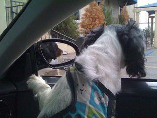 cavalier in car mirror