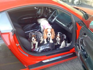 dogs in R8