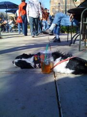 Willie Sturgeon at Starbucks