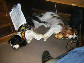cavaliers under desk