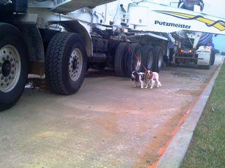 cavaliers and big trucks