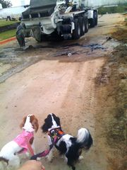 dogs and concrete pumper