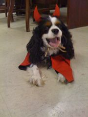 willie haloween costume