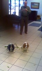 dogs at riverbend bank