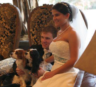 joanne wells, cavaliers in wedding, dogs in wedding