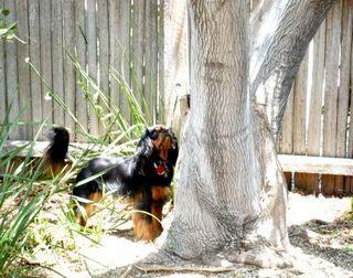 jhansi under tree