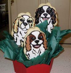 cavalier cookies