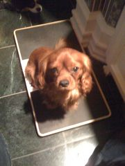 waco puppy mill bust lucas