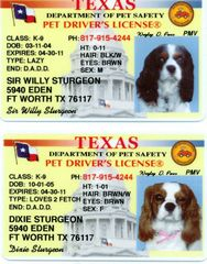 drivers licenses pet dogs
