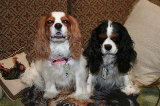 willie sturgeon, dog drivers license