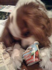 ben and jerrys ice cream for dogs