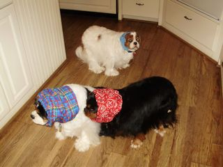 dogs in snoods 001