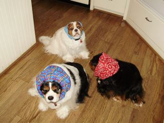dogs in snoods 002