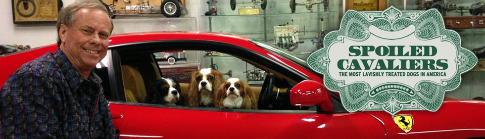 The richest, most spoiled and outrageously treated dogs in America
